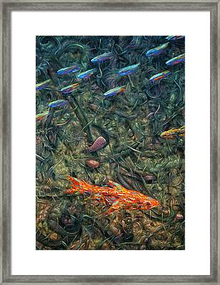 Aquarium 2 Framed Print by James W Johnson