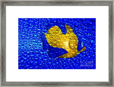 Aquarium Framed Print by Clayton Bruster