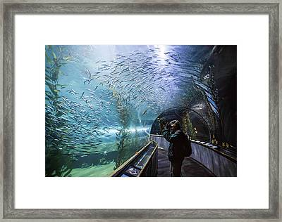 Aquarium Of The Bay Underwater Tunnel - San Francisco, Ca Framed Print by Jennifer Rondinelli Reilly - Fine Art Photography