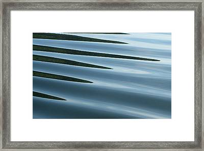 Framed Print featuring the photograph Aquarius by Cathie Douglas