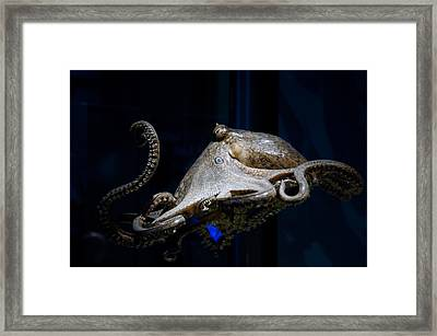 Aquatic Red Wing Fan Framed Print by LeeAnn McLaneGoetz McLaneGoetzStudioLLCcom