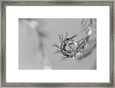 Aquatic Zen 03 Framed Print by Rico Besserdich