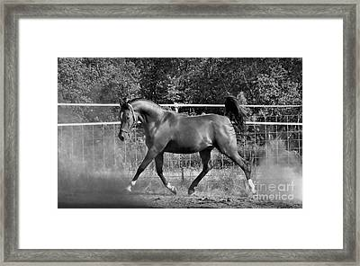 Arab At Play Bw Framed Print by Julia Hassett