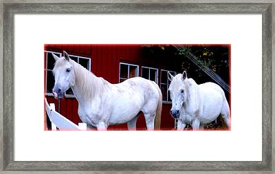 Arab Horses At Home, Behind Their Fence   Framed Print