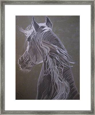 Framed Print featuring the drawing Arab Horse by Melita Safran
