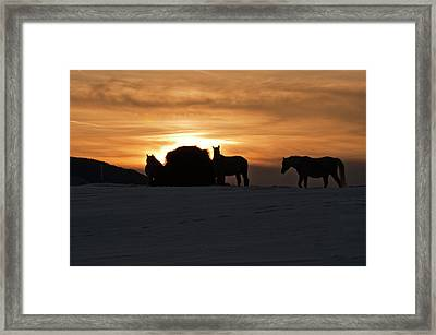 Framed Print featuring the photograph Arab Horses At Sunset by Daniel Hebard