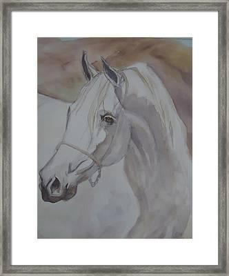 Arab Stallion In The Desert Framed Print