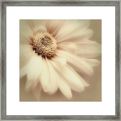 Framed Print featuring the photograph Arabesque In Butternut by Darlene Kwiatkowski