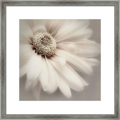 Framed Print featuring the photograph Arabesque In Champagne by Darlene Kwiatkowski