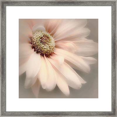 Framed Print featuring the photograph Arabesque In Peach Glow by Darlene Kwiatkowski