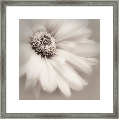 Framed Print featuring the photograph Arabesque In Soft Charcoal by Darlene Kwiatkowski