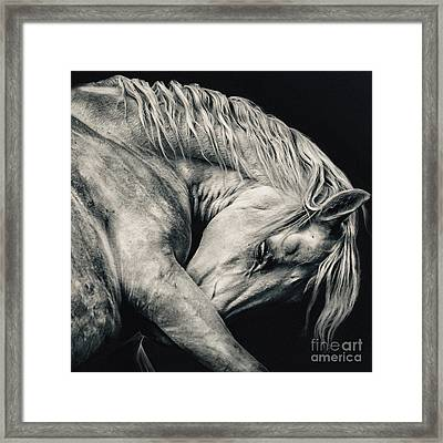 Arabian Beauty White Horse Portrait Framed Print