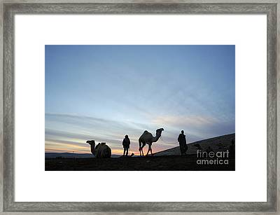 Arabian Camel At Sunset Framed Print by PhotoStock-Israel