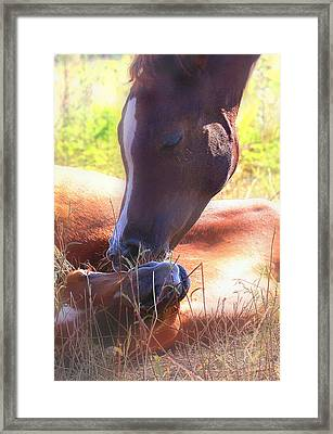 Arabian Foals - Peaceful Framed Print
