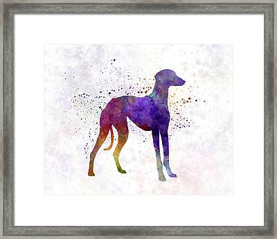 Arabian Greyhound In Watercolor Framed Print