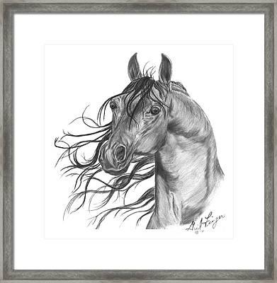Arabian Head Framed Print by Gail Finger