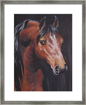 Arabian Horse 1 Framed Print by Barbara Prestridge