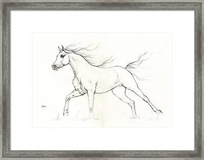 Arabian Horse Drawing 2015 12 20 Framed Print