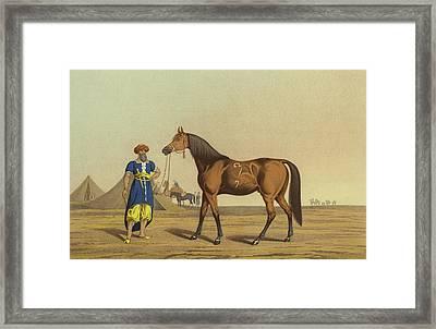 Arabian Horse Framed Print