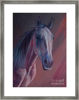 Arabian Horse Portrait 01 Framed Print by Gull G