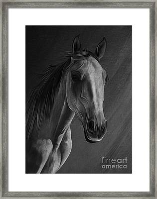 Arabian Horse Portrait 02 Framed Print by Gull G