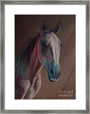 Arabian Horse Portrait 03 Framed Print by Gull G