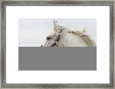 Arabian Horse Portrait Framed Print by Laurie With