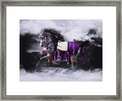 Arabian Horse  Shaitan Framed Print