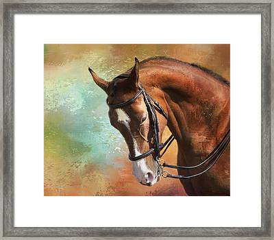 Arabian Horse Framed Print by Theresa Tahara