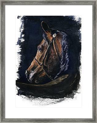 Arabian Framed Print by John D Benson