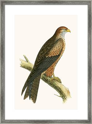 Arabian Kite Framed Print by English School