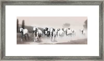 Arabian Mares - Home Run  Framed Print
