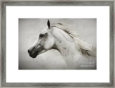 Arabian White Horse Portrait Framed Print
