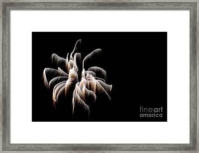 Arachnid 4893 Framed Print