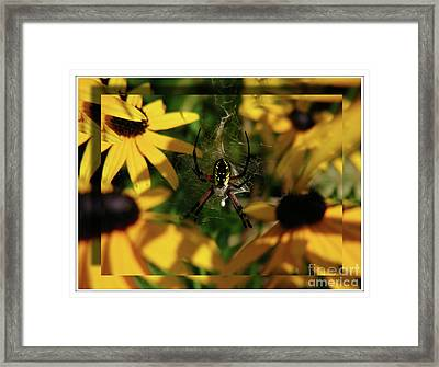 Arachnid Beauty Framed Print by Deborah Johnson