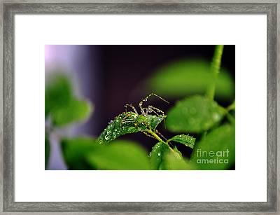 Arachnishower Framed Print