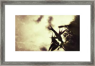 Arachnophobia Framed Print by Isabella F Abbie Shores FRSA
