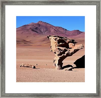 Arbol De Piedra - Stone Tree Framed Print by Sandy Taylor
