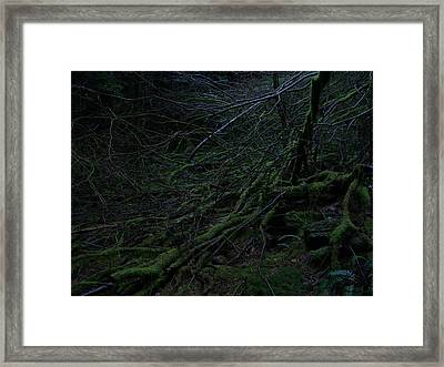 Arboreal Forest Framed Print by Jim Thomson