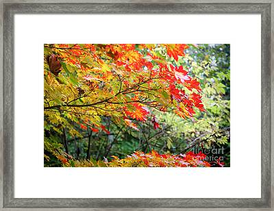 Framed Print featuring the photograph Arboretum Autumn Leaves by Peter Simmons