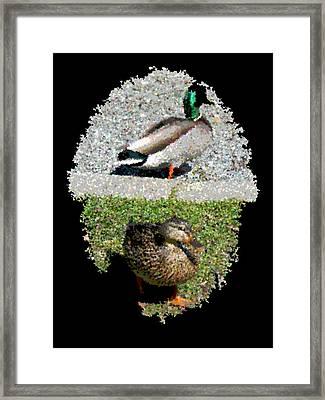 Arboretum Quackers Framed Print