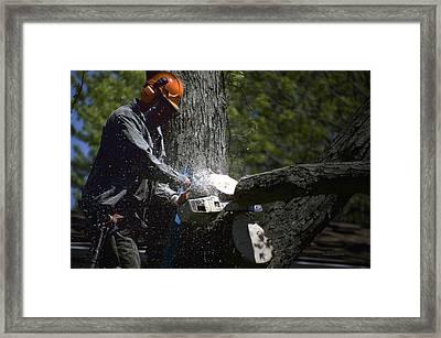 Arborist At Work Tree Pruning 01 Framed Print by Thomas Woolworth