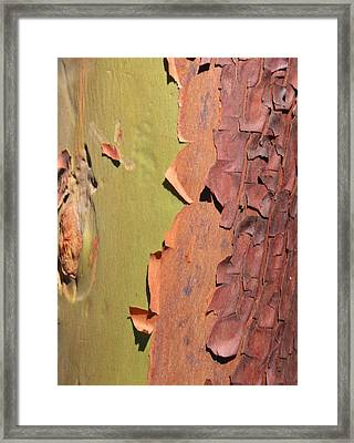 Arbutus Tree Framed Print by Sherry Leigh Williams