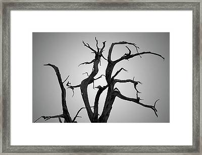 Framed Print featuring the photograph Arches Np Xix Bw by David Gordon