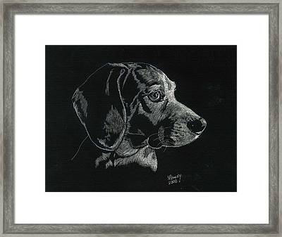 Archie Framed Print by Norma Rowley