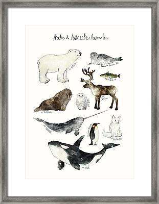 Arctic And Antarctic Animals Framed Print by Amy Hamilton