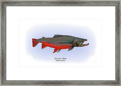 Arctic Charr Framed Print by Ralph Martens