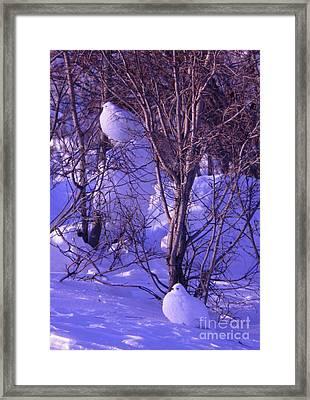 Arctic Chickens Framed Print by Adam Owen