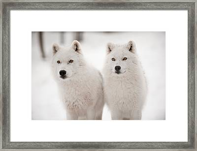 Arctic Duet Framed Print by PNDT Photo