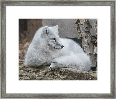 Arctic Fox Profile Framed Print